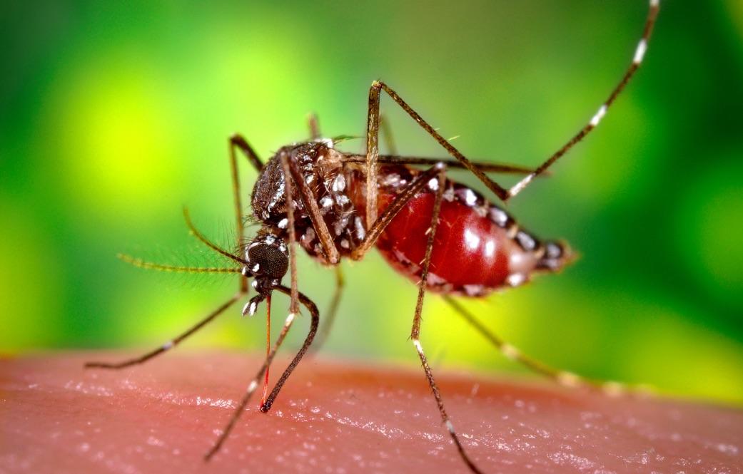 Photo: mosquito.es