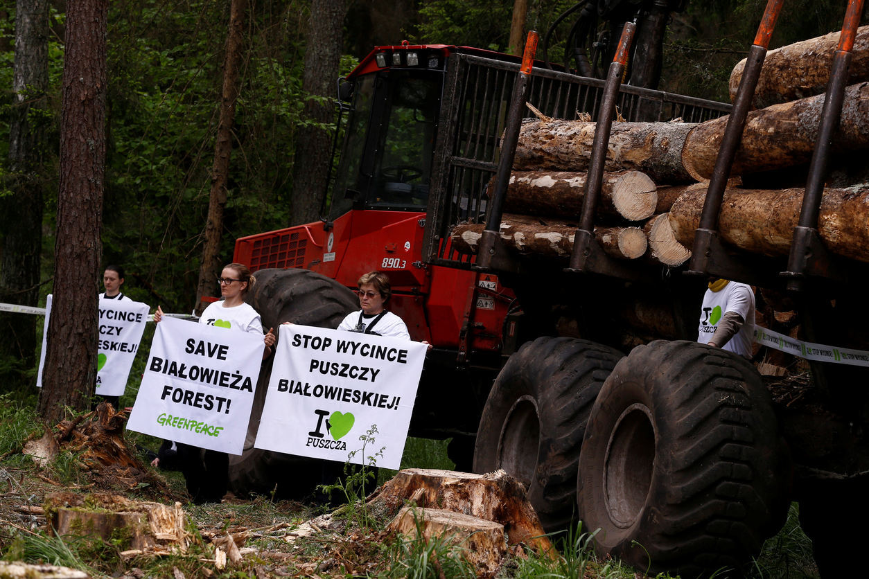 Poland violated European Union  laws by logging in Białowieża forest, court rules